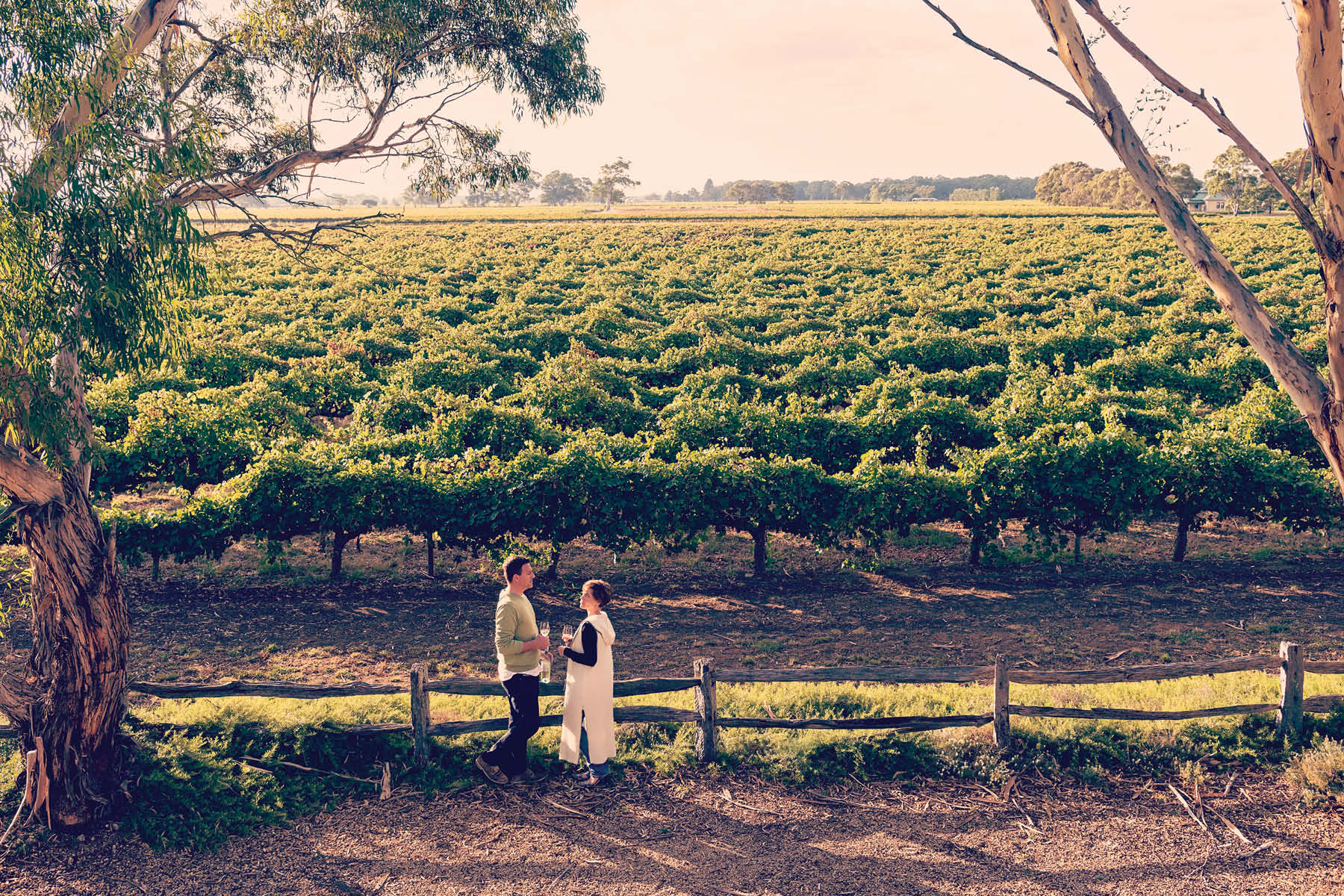 Langhorne Creek Grape and Wine Association